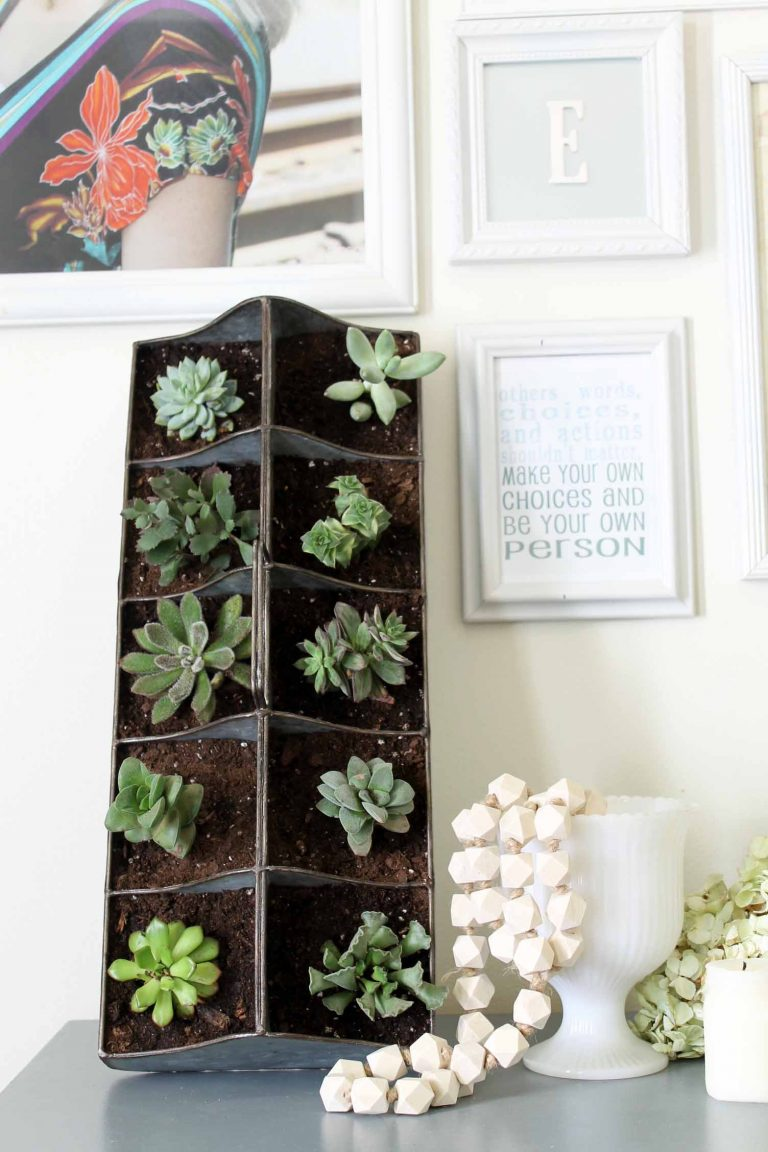 Creative Ways To Display Succulents