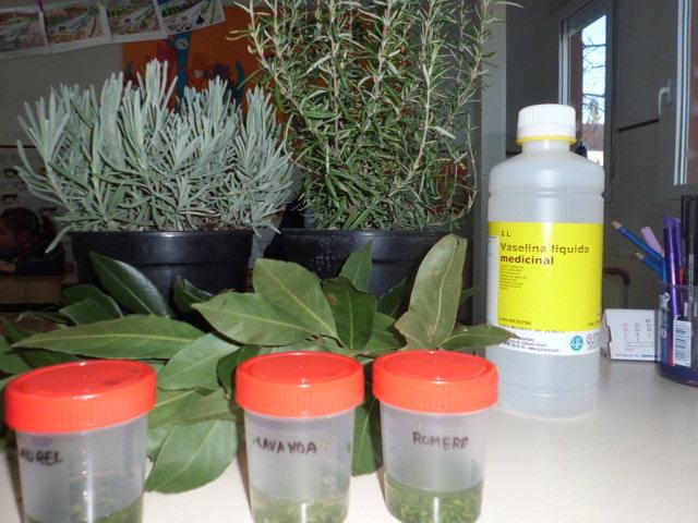 Experimentamos con las plantas