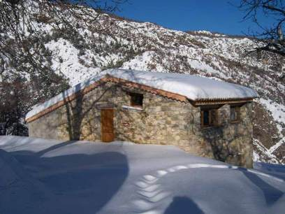 Les pampilles sous la neige