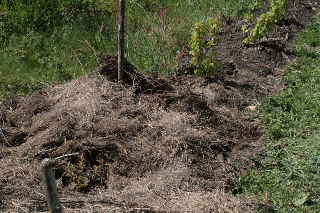 La ferme d 39 emilie blog archive attaque de pucerons agriculture biologique l 39 le d 39 yeu - Purin d ortie desherbant ...