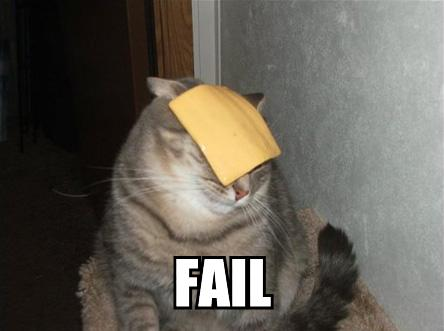 cheese get down from that cats head you are not a hat youre not even fabric