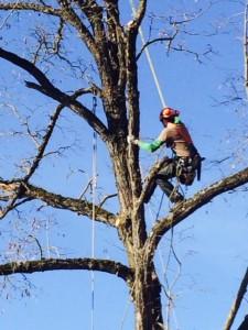 La Finestra di Stefania Come fare a potare gli alberi alti in giardino senza scala