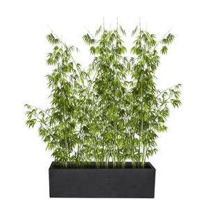 pot de fleur et cache pot pour plante