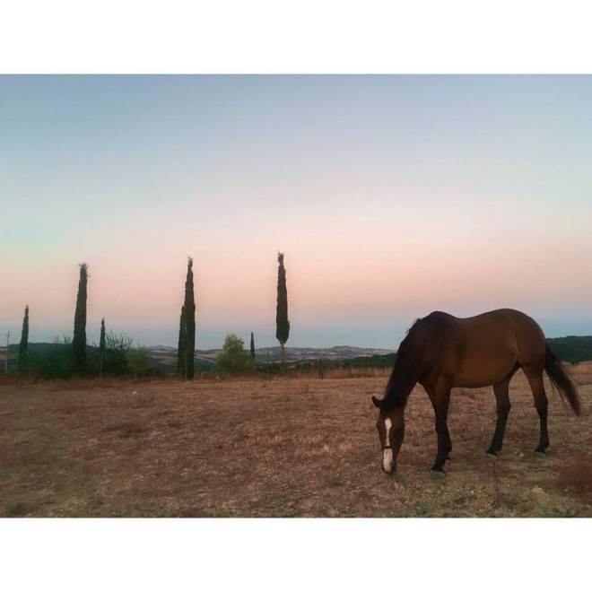 horses-statiano