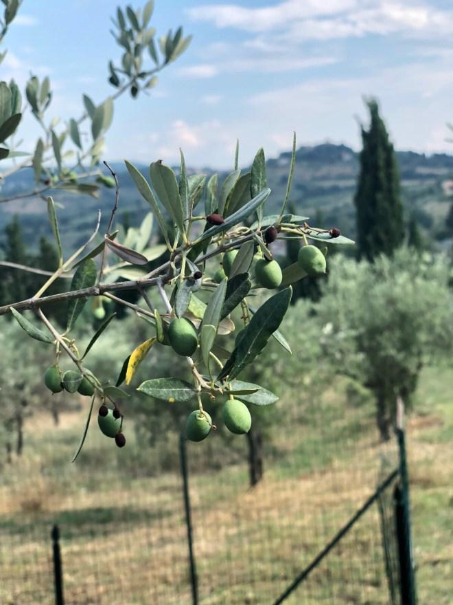Rustic Toscana olives Montegemoli