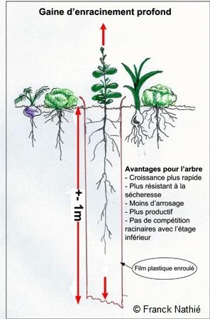Comment gérer l'enracinement des arbres dans un jardin forêt?