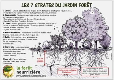 les-7-strates-du-jardin-foret-permaculture