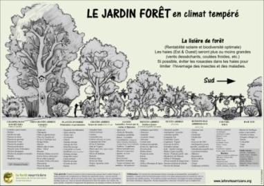 liste-jardin-foret-7-strates-en-permaculture