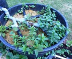 biofiltre-campel-araignee