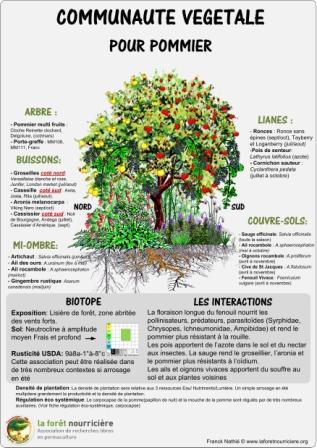 Quelles plantes associer avec le Pommier