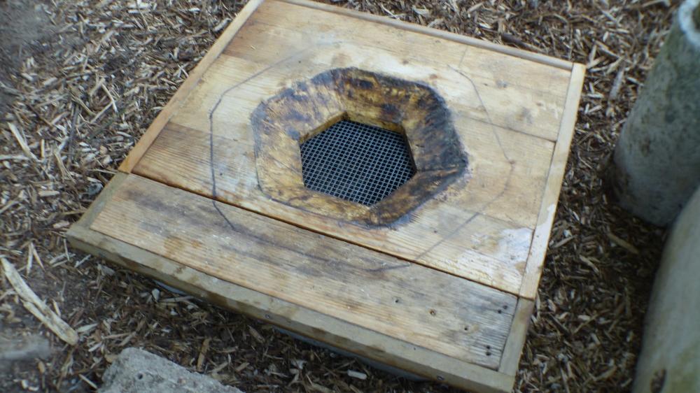ruche posé sur compost
