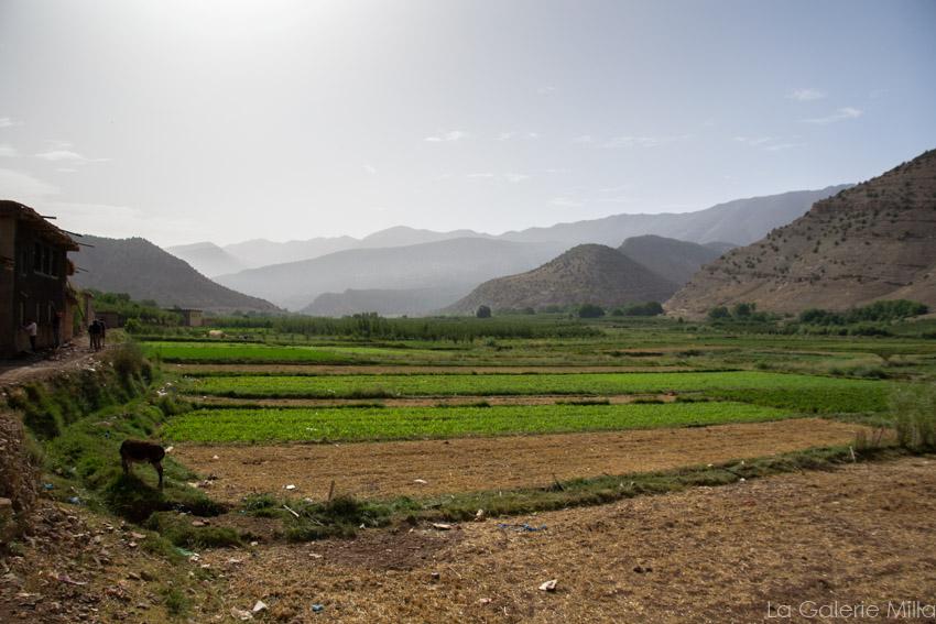 un champs dans les montagnes au maroc