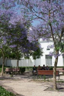 Parc avec fleurs violettes