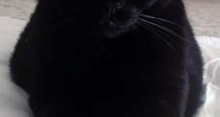 Il Gatto Artù