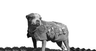 Il Sergente Stubby. Foto dal Web