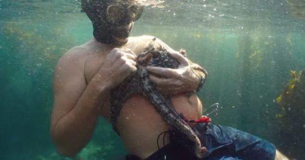 My Octopus Teacher su Netflix