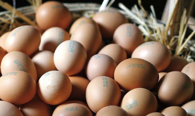 scandalo uova fipronil