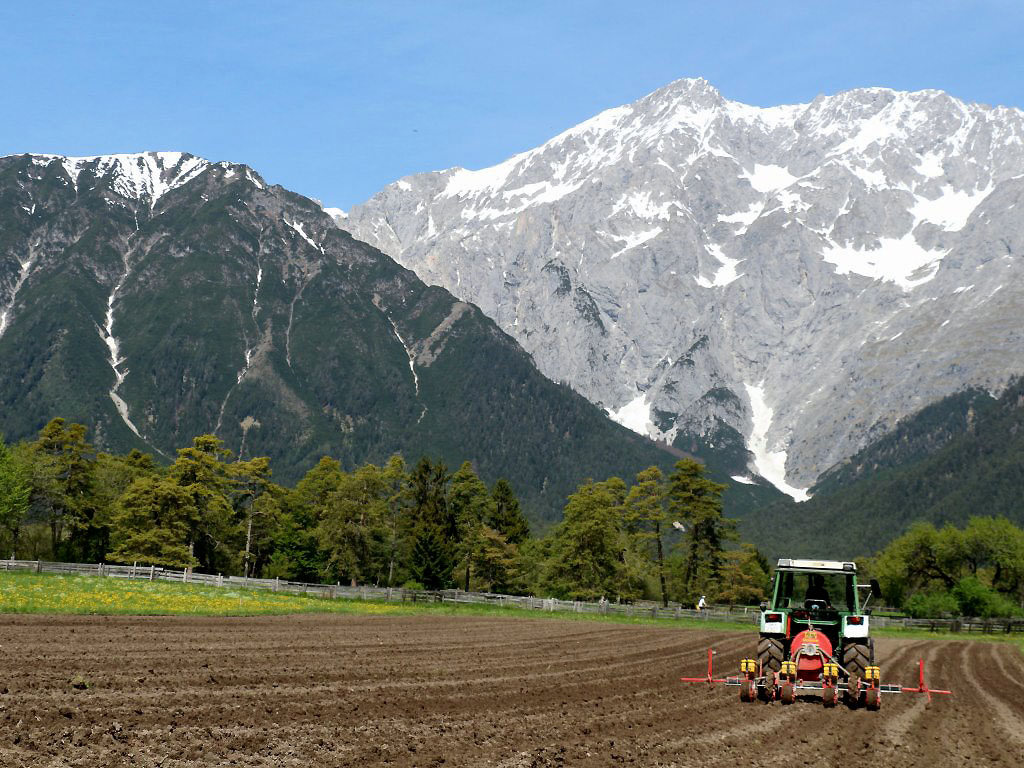 "Hybridmais aus dem Lagerhaus - ""das Beste, was es bei Mais gibt"", Foto: Knut Kuckel/Mieming-Online.at"