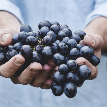 A bunch of grapes in two hands.