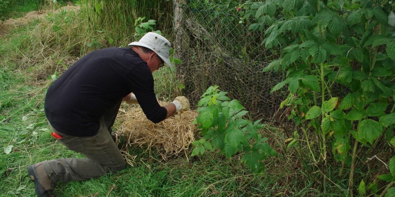 Le début de notre jardin forêt et l'art de creuser un trou