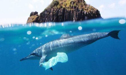 Seulement 13% des océans ne sont pas endommagés par l'activité humaine