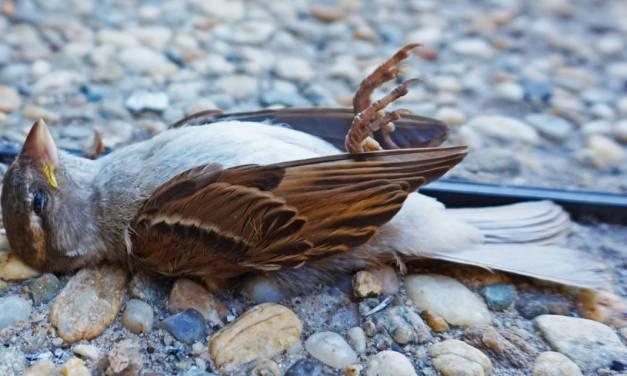 Les espèces d'oiseaux sont menacées d'extinction des centaines de fois plus vite qu'on ne le pensait