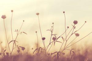 flores marca de agua