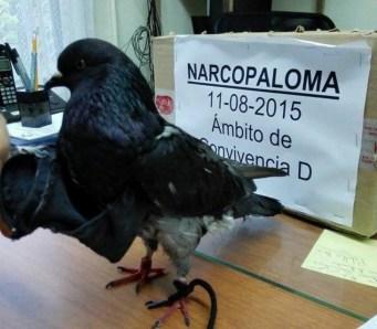 Narcopaloma detenida