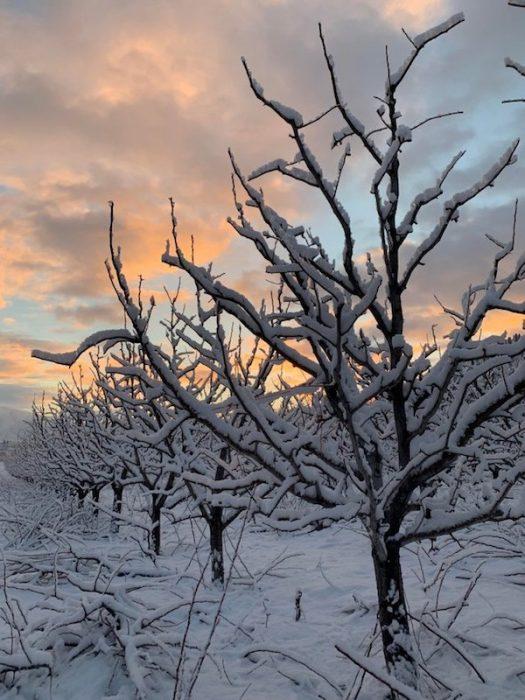 imágenes paz interior árboles