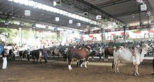Programación de la Feria nacional de la ganadería 2017