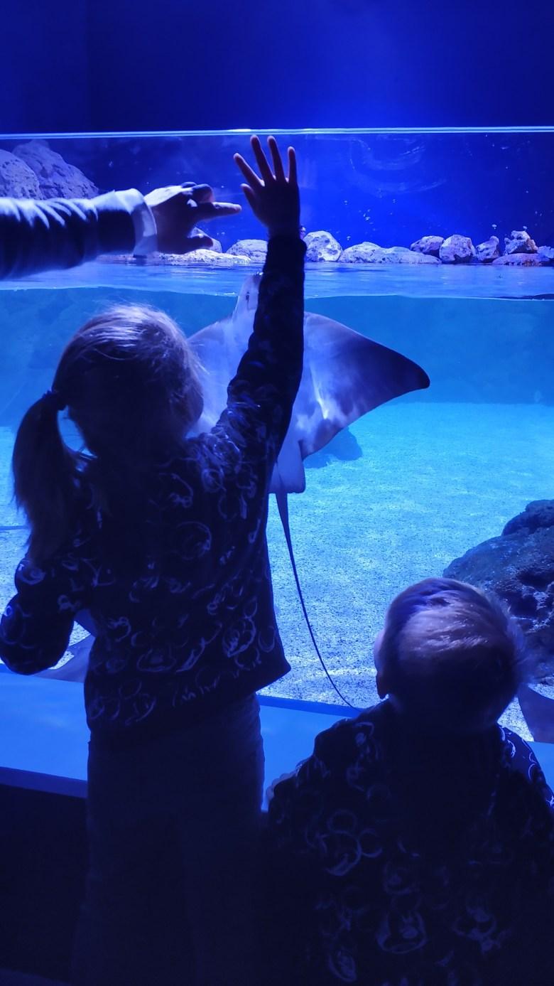 Atlantis-aquarium-LGDL-13.jpg