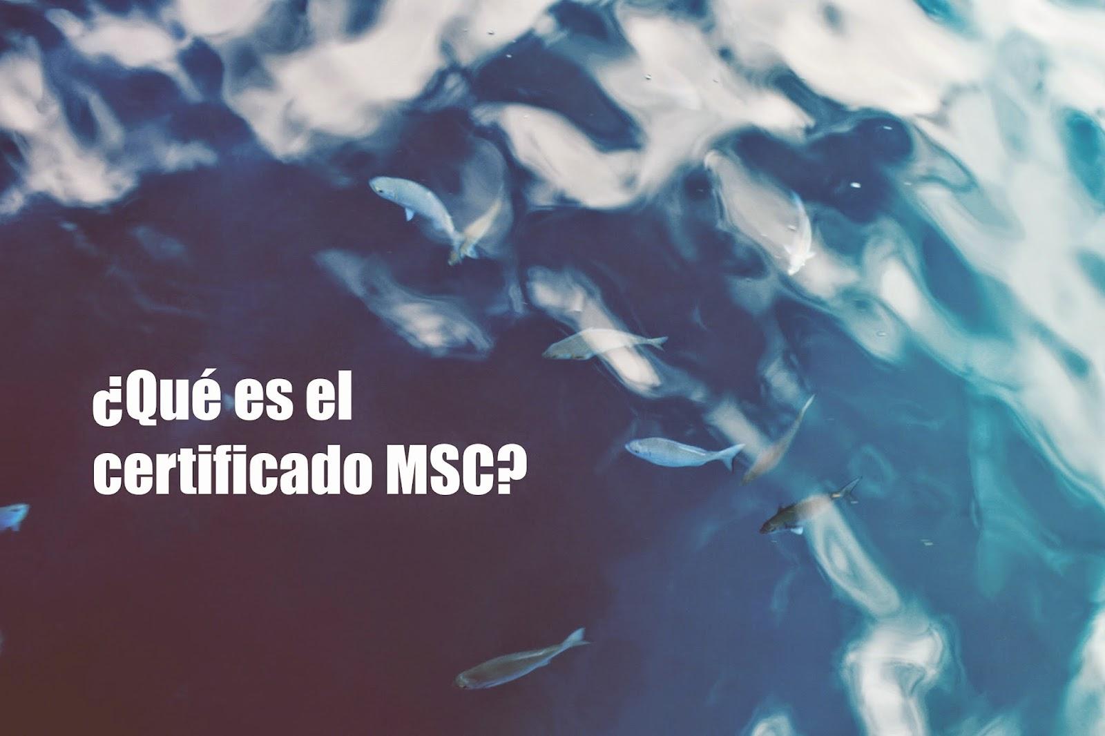 certificado msc