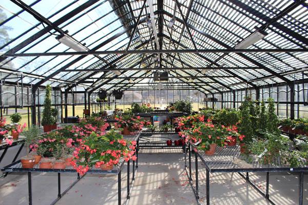 inside greenhouse IMG_5919