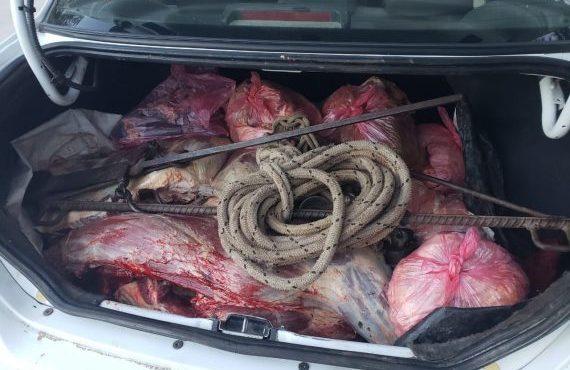 Carne y animales silvestres entre los elementos secuestrados por la policía rural y ambiental