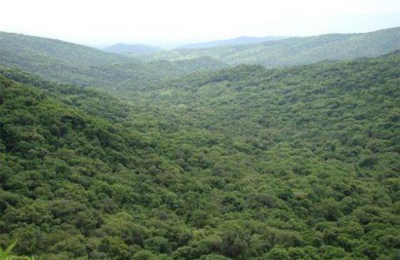 Convocan a la presentación de proyectos de manejo y conservación de Bosques Nativos