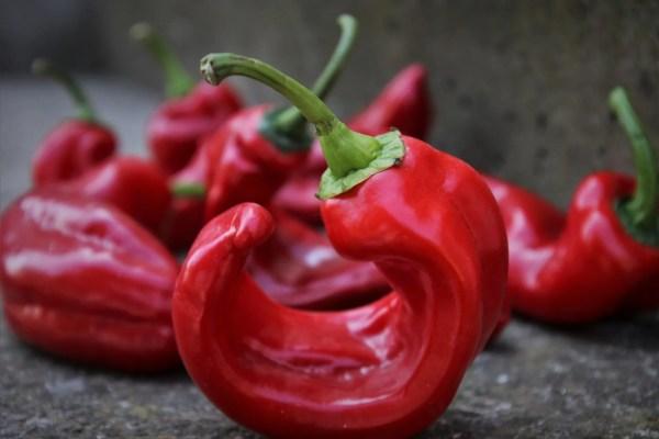 red-pepper-4093581_1920