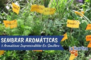 Como Hacer Semillero De Aromaticas