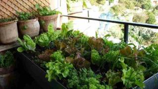 Plantar En Huertos Urbanos con Poca Luz
