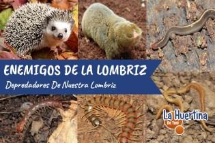Depredadores Enemigos De La Lombriz Californiana En El Vermicompost