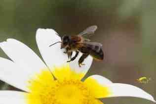 10 Plantas para atraer a las abejas