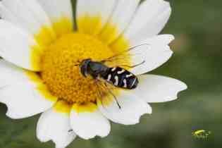 Top 10 Plantas que atraen insectos benéficos