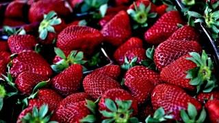 Como Sembrar Fresas o Frutillas En Casa