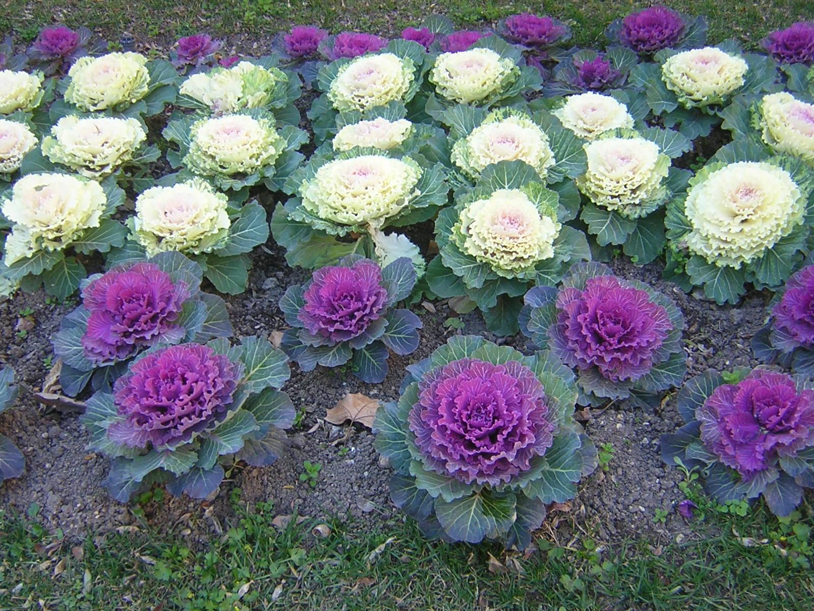 20 plantas resistentes al fr o - Plantas de exterior resistentes al calor ...