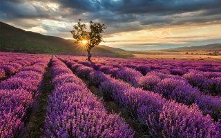 10 errores más comunes en el cultivo de aromáticas