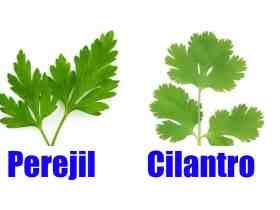 Cómo diferenciar el perejil y el cilantro