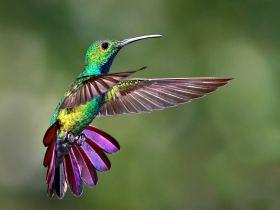Flores que atraen colibríes al huerto