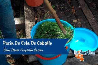 Como Hacer Purin De Cola De Caballo Fungicida Casero