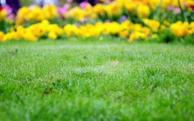 Herbicidas Caseros contra las malas hierbas