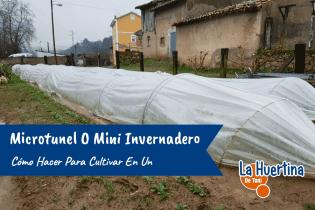 Como Hacer Un Microtunel O Mini Invernadero Para Cultivar