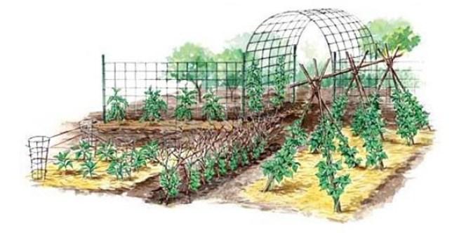 Como hacer un arco barato para cultivar trepadoras for Jardin vertical barato
